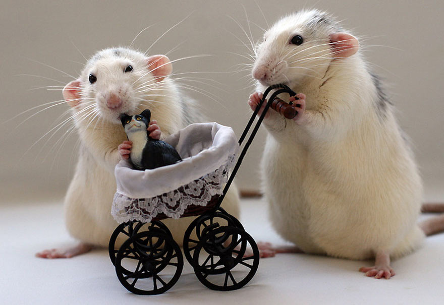 cool-rats-toy-cat